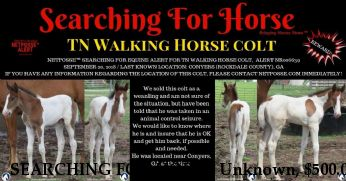 SEARCHING FOR HORSE Unknown, $500.00 REWARD  Near Conyers, GA, 30012