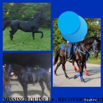 MISSING EQUINE Ice , RECOVERED 12/1/18 Near HOUSTON, TX, 77584