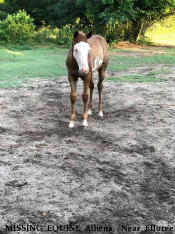 MISSING EQUINE Athena,  Near Elloree , SC, 29047