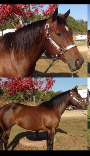 MISSING EQUINE Hot Little Dixon,  Near Atlanta , KS, 67008