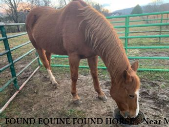 FOUND EQUINE FOUND HORSE ,  Near Mt Pleasant , TN, 38474