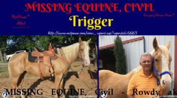 MISSING EQUINE, Civil - Rowdy aka Trigger,  Near Bartonville, TX, 76266