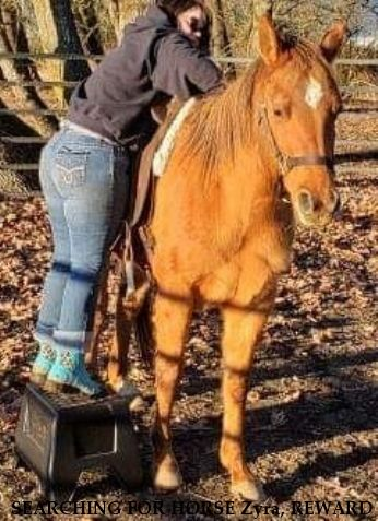 SEARCHING FOR HORSE Zyra, REWARD  - LOCATED/SAFE Near Junction City, OR, 97448