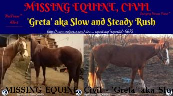 MISSING EQUINE, Civil - 'Greta' aka Slow and Steady Rush, $5000.00 REWARD  Near Temecula, CA, 92591