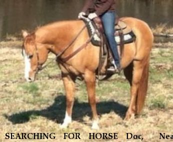 SEARCHING FOR HORSE Doc,  Near Athens, AL, 35614
