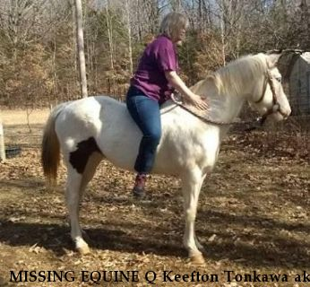 MISSING EQUINE Q Keefton Tonkawa aka 'Lacey',  RECOVERED 1/30/19 Near Harrison, AR, 72601