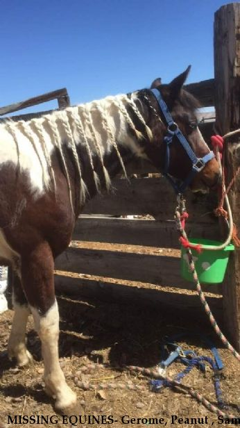 MISSING EQUINES- Gerome, Peanut , Sam,  $1000 REWARD (Manny and Magic Recovered) Near Lovell, WY, 82431