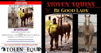 STOLEN EQUINE Be Good Lady,  Near Spring, TX, 77373