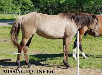 MISSING EQUINE Brit & Moonlight REWARD - RECOVERED Near FLATONIA, TX, 78941