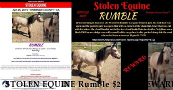 STOLEN EQUINE Rumble $2000.  REWARD RECOVERED HOME SAFE Near Nuevo, CA, 92567