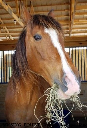 MISSING EQUINE Bravios Indiana Jones aka Indy - CLOSED/LOCATED Near Iron Ridge , WI, 53035