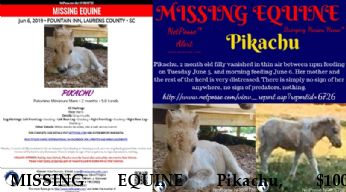 MISSING EQUINE Pikachu, $1000 REWARD - Located 6/12/2019 Near Fountain Inn, SC, 29644