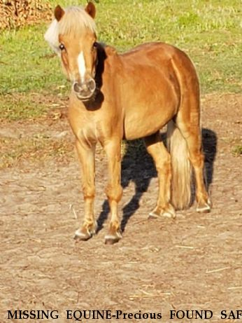 MISSING EQUINE-Precious FOUND SAFE Near CRYSTAL RIVER, FL, 34428