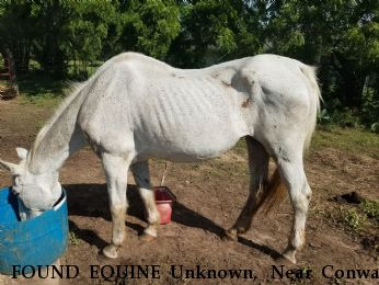 FOUND EQUINE Unknown,  Near Conway Springs, KS, 67068