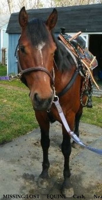 MISSING/LOST EQUINE Cash,  Near Alloway, NJ, 08001