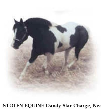 STOLEN EQUINE Dandy Star Charge, Near Shiloh, OH, 99999